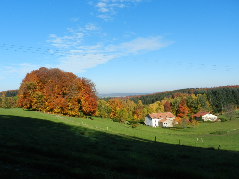 Bois-Queue-du-Renard-9